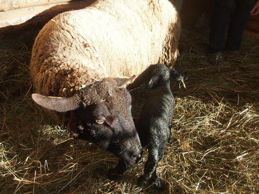 Mama-mit-Lamm-schwarz