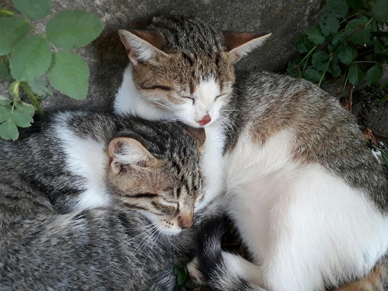 Katzen_Beitragsbild