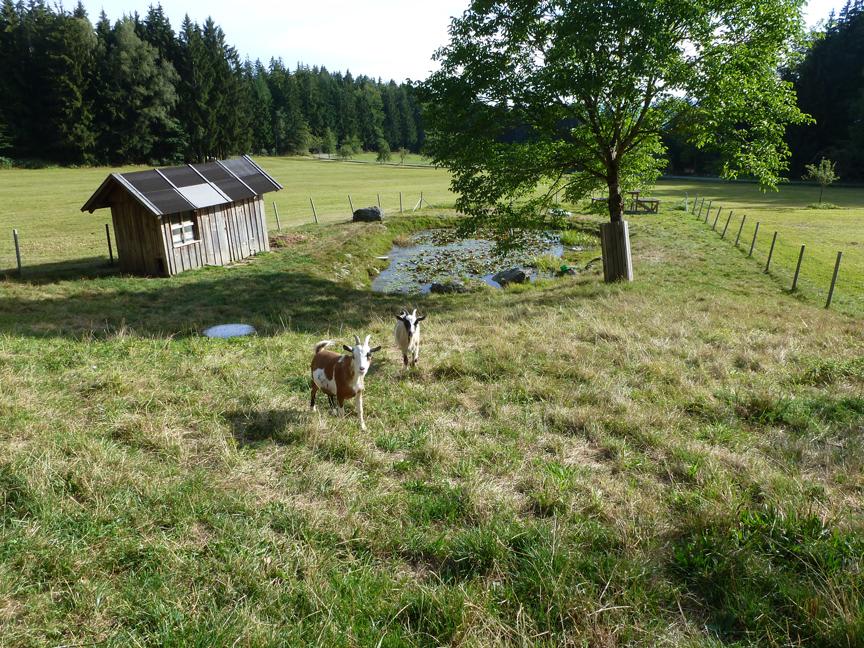 Die Ziegen: Lisl, Mia und
